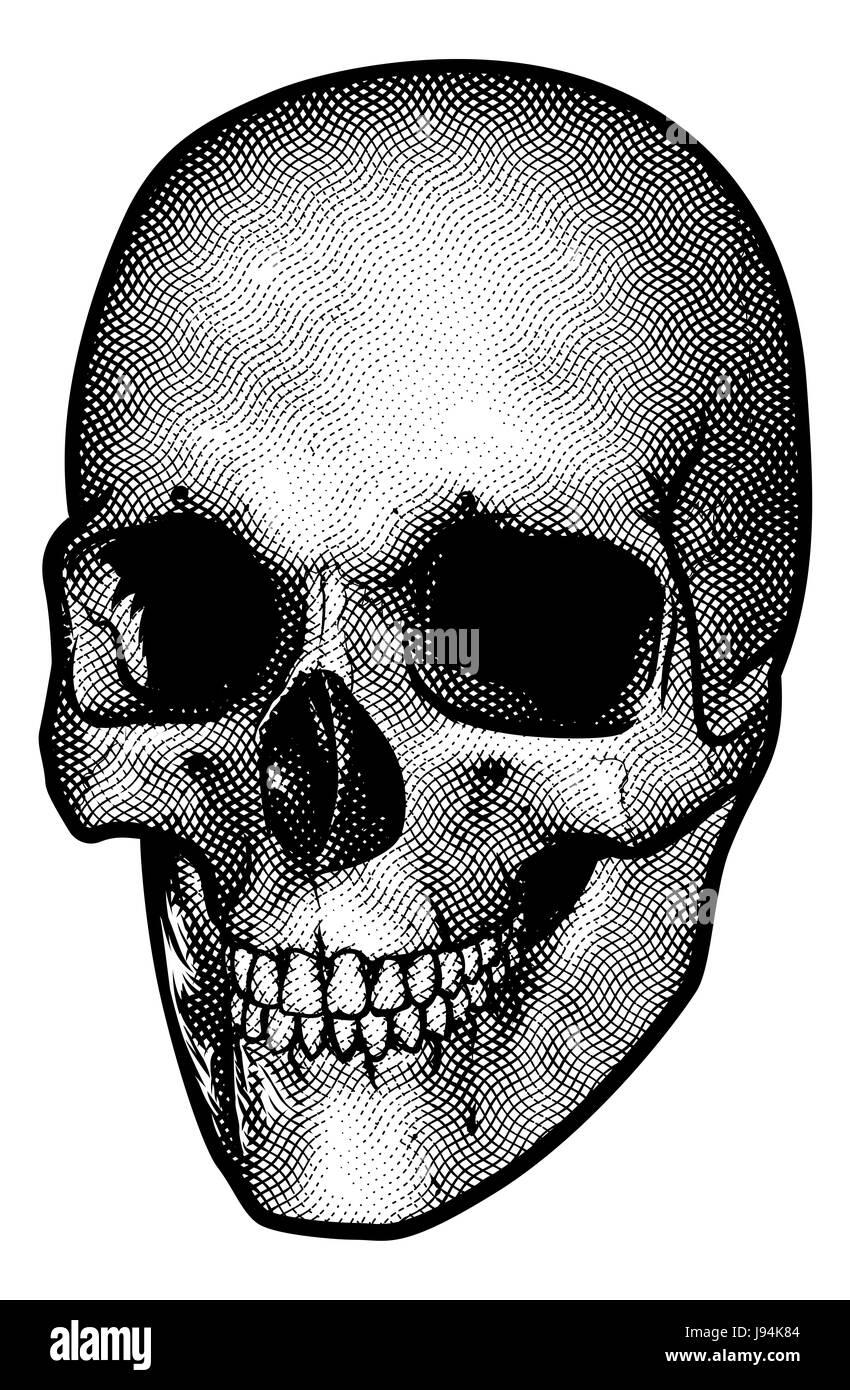 Un disegno di un teschio umano in un vintage retrò xilografia incisa o  stile inciso Immagini d7af4f5fae93