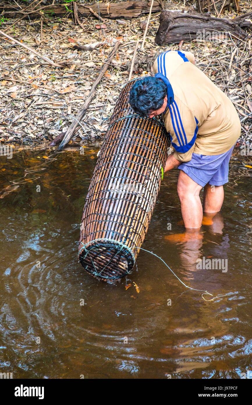 Controllo dell uomo nella sua trappola di pesce nel Kalimantan, Indonesia. Immagini Stock