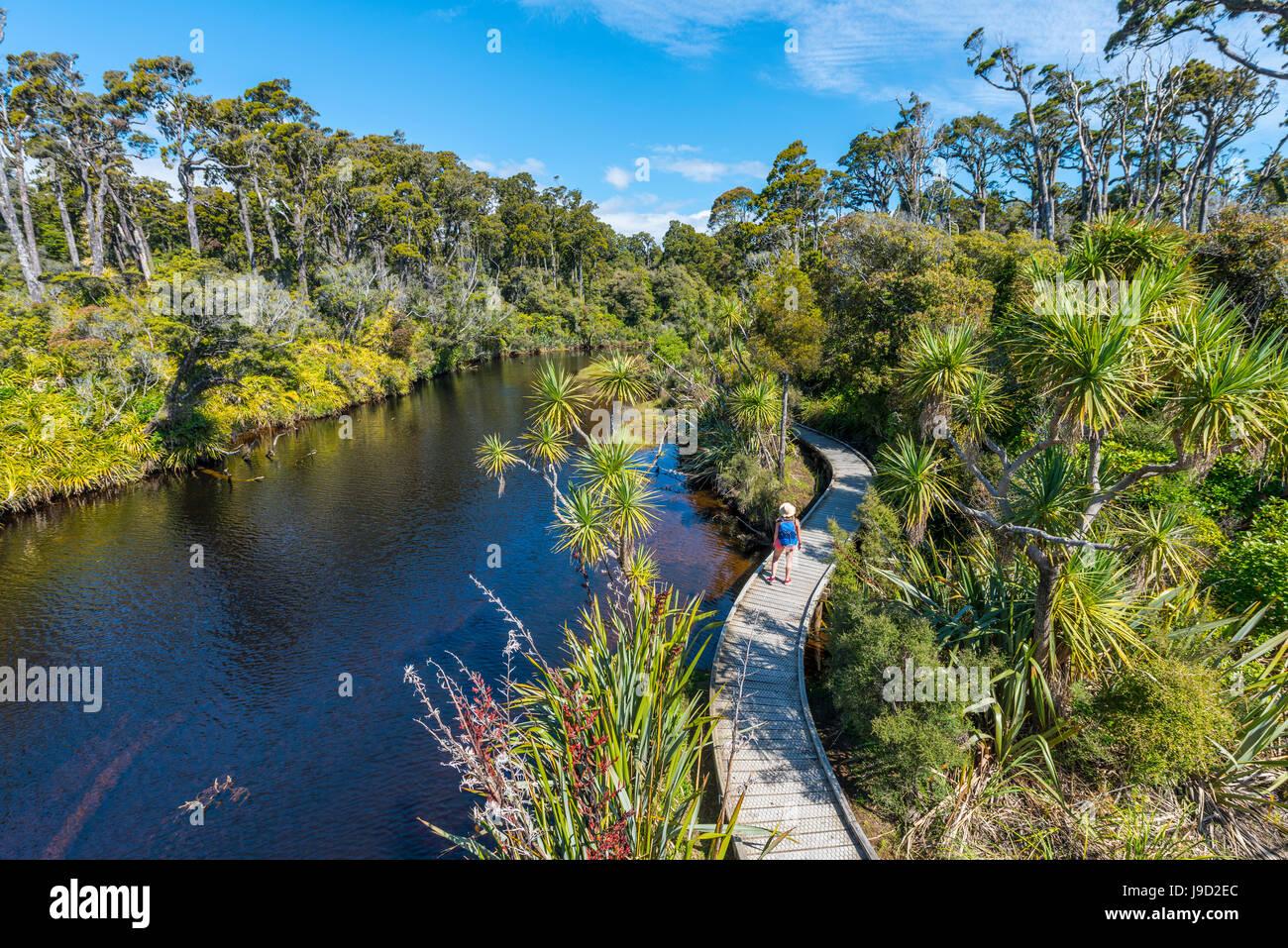 Escursionista femmina al fiume con il percorso, nave Creek, pioggia moderata foresta, Haast, West Coast, Nuova Zelanda Immagini Stock