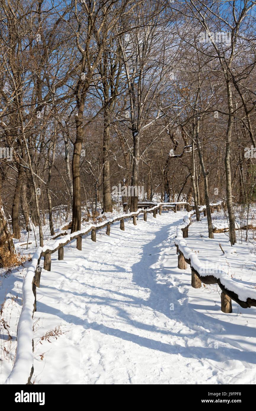 Un sentiero vuoto curve nel la distanza in una pittoresca vista la mattina dei boschi del Parco Centrale dopo una Immagini Stock
