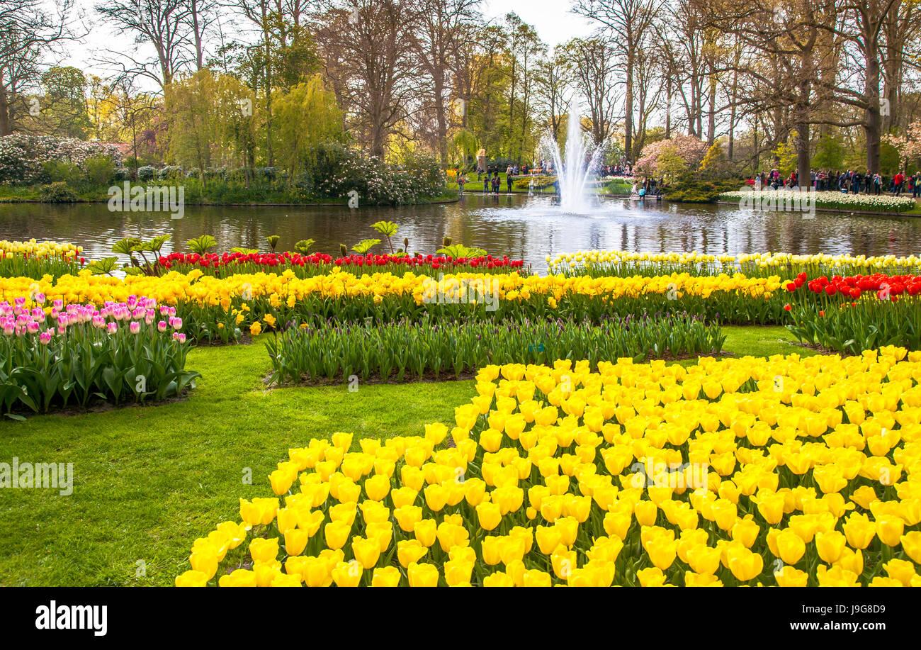 Keukemhof romantici giardini in fiore paesaggio lisse olanda foto