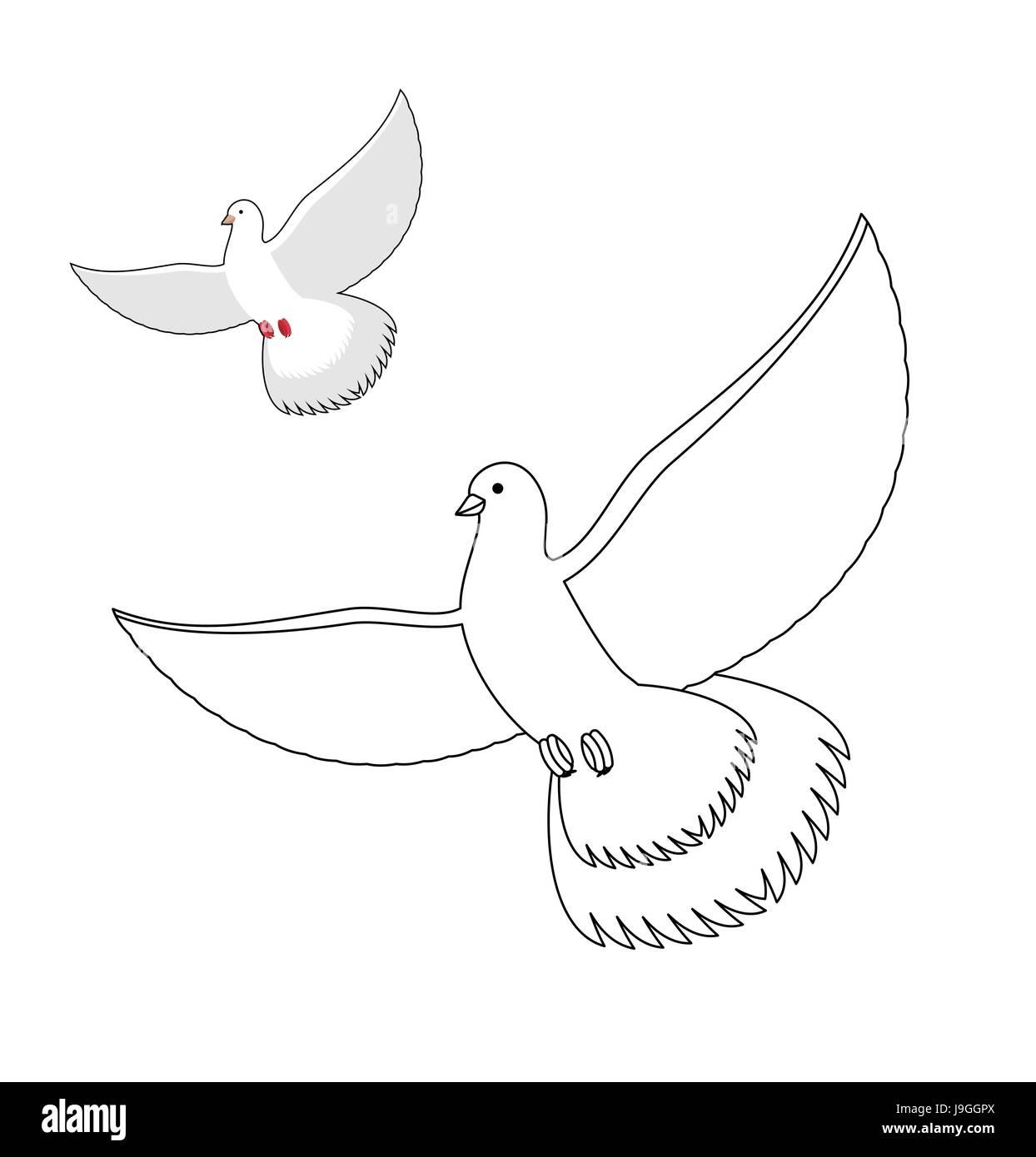 Colomba Bianca Il Libro Da Colorare Flying Piccione Bianco Uccello