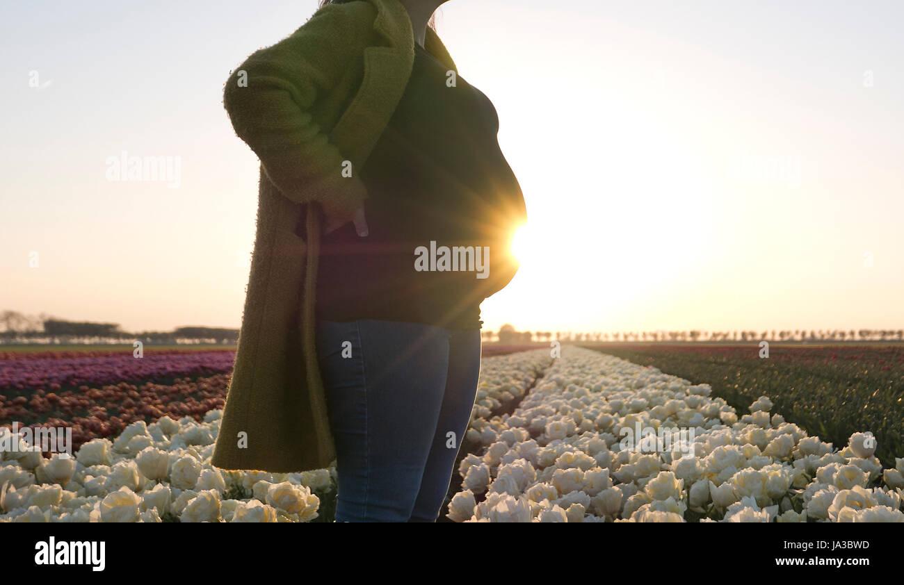 Una donna in stato di gravidanza in appoggio le mani sul suo dosso come essa si erge in un campo di magnifici fiori. Immagini Stock