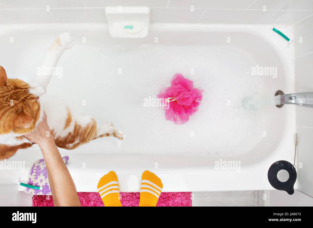 Gatto arancione essendo abbassata in un bagno di bolle con acqua in esecuzione. Immagini Stock