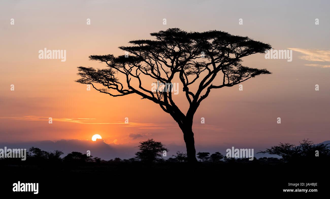 Sunrise e Acacia nel Parco Nazionale del Serengeti in Tanzania Immagini Stock