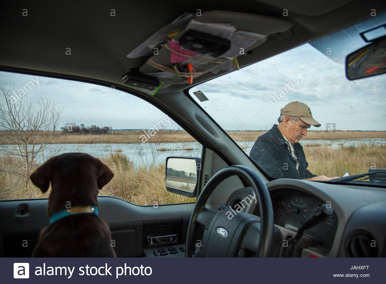 Un Labrador retriever orologi di un dipartimento di Risorse Naturali officer presso l'Orso Island Wildlife Management Immagini Stock