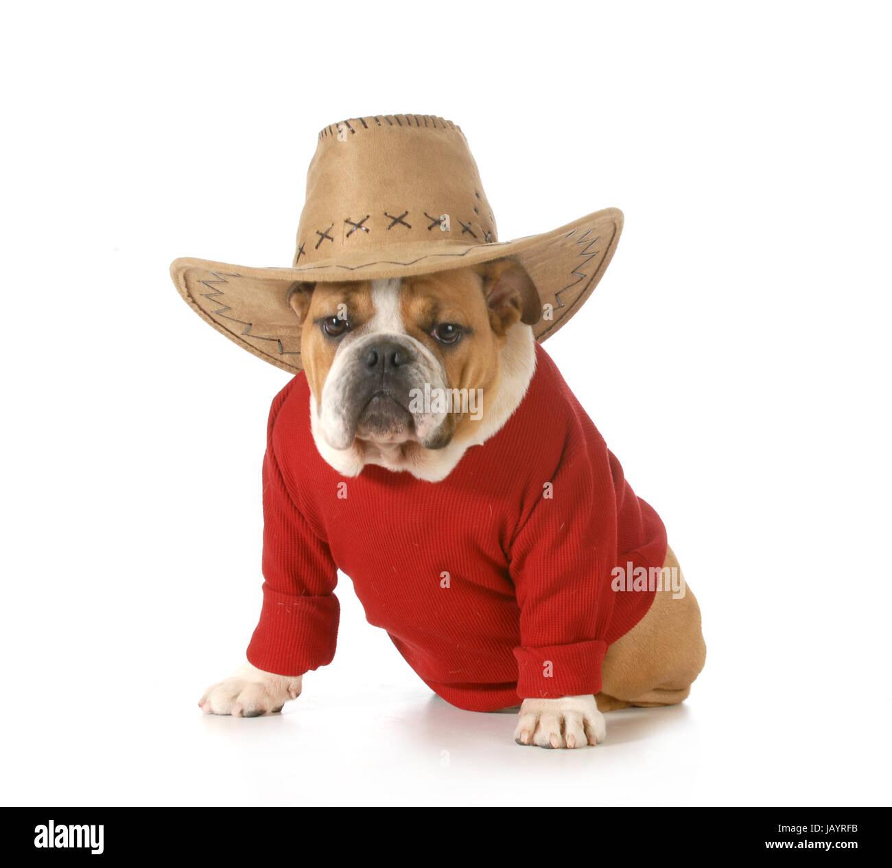 Paese cane - Bulldog inglese indossando maglietta rossa e western hat  isolati su sfondo bianco - b584c4221ceb