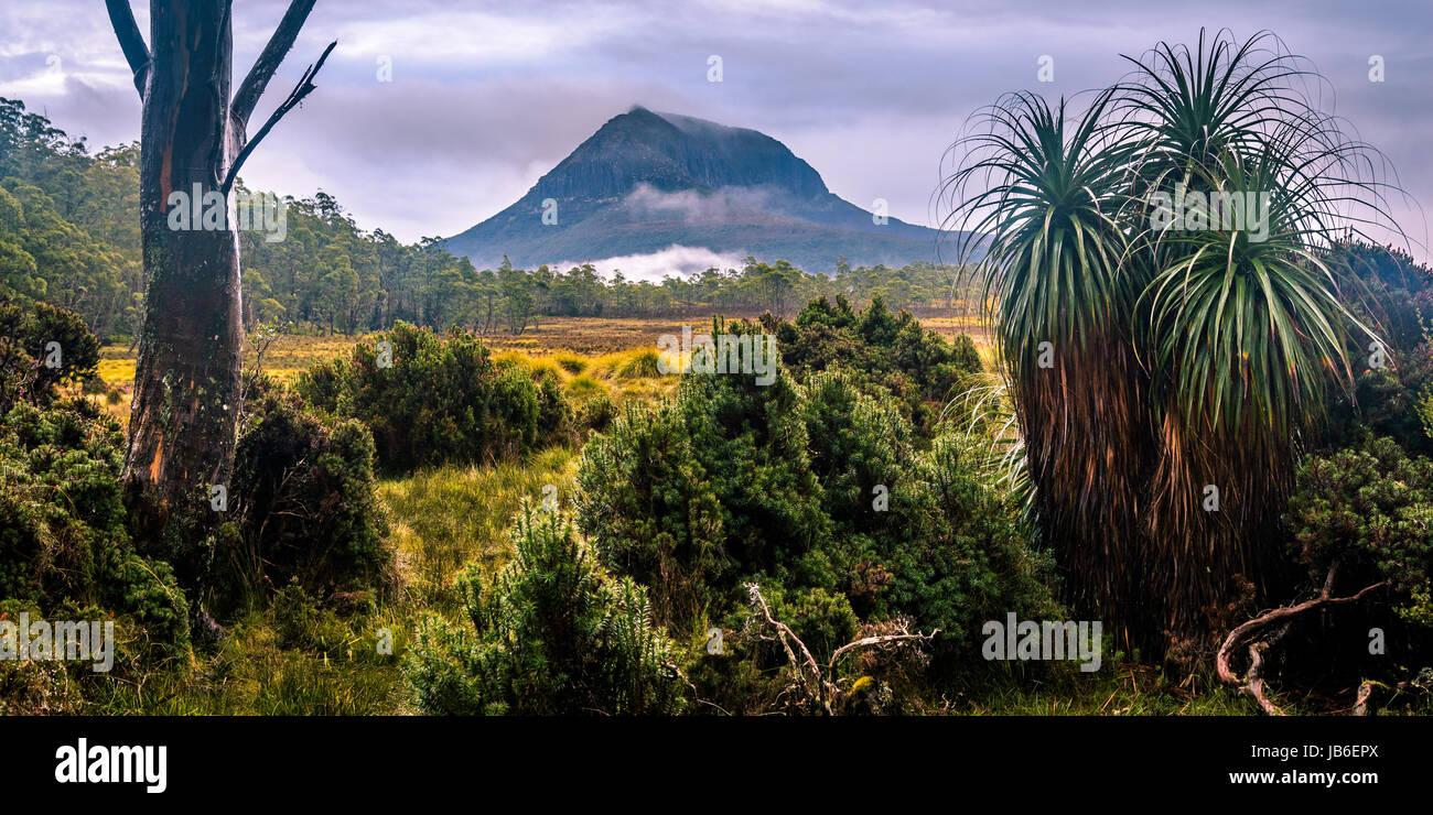 Pandani e il Monte Pelion West a Overland Track, Tasmania Foto Stock