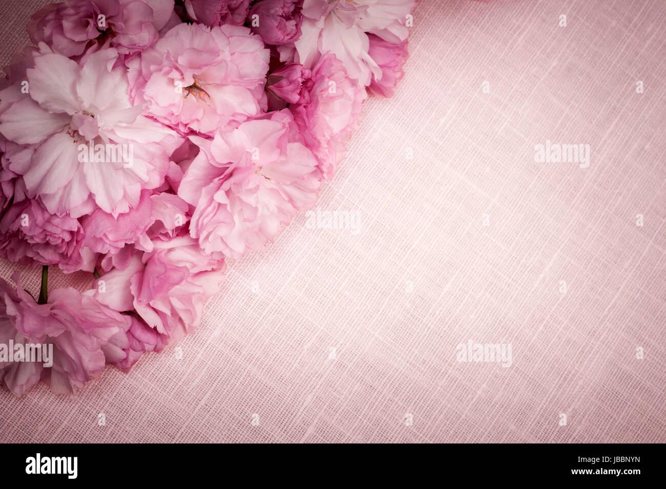 Rosa In Tessuto Di Lino Sfondo Con Fiori Di Ciliegio Foto Immagine