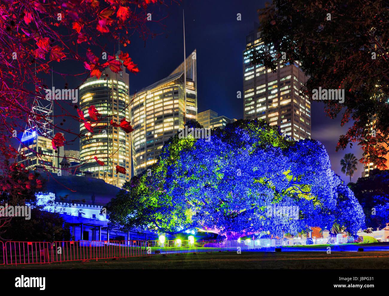 Sydney Royal Botanic Gardens grande albero illuminato di luce blu contro il CBD di torri grattacielo durante la Foto Stock