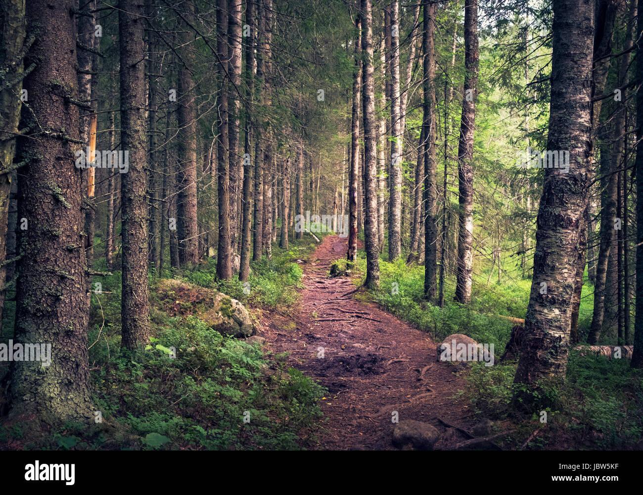Paesaggio idilliaco con percorso e foreste vergini in mattinata estiva in Koli, Finlandia Immagini Stock