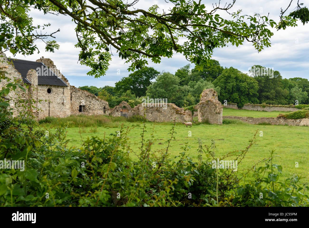 Rovine medievali di Quarr Abbey, Isle of Wight, Regno Unito Foto Stock