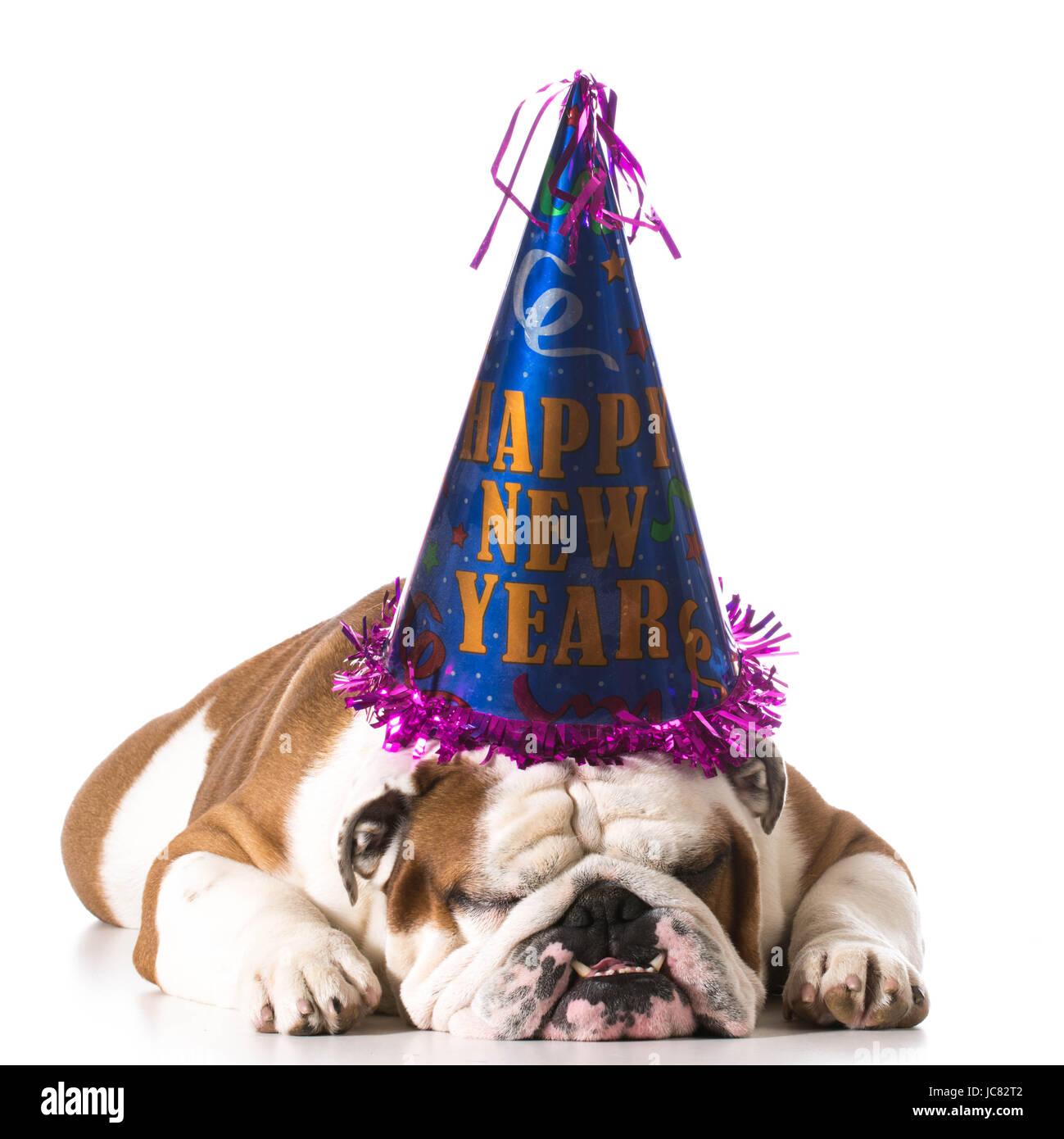 Cane che indossa felice anno nuovo hat su sfondo bianco - Bulldog inglese  Immagini Stock 0ebef11e9306