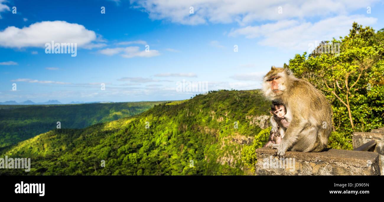 Le scimmie presso il punto di vista delle gole. Black River Gorges national park. Maurizio. Panorama Immagini Stock