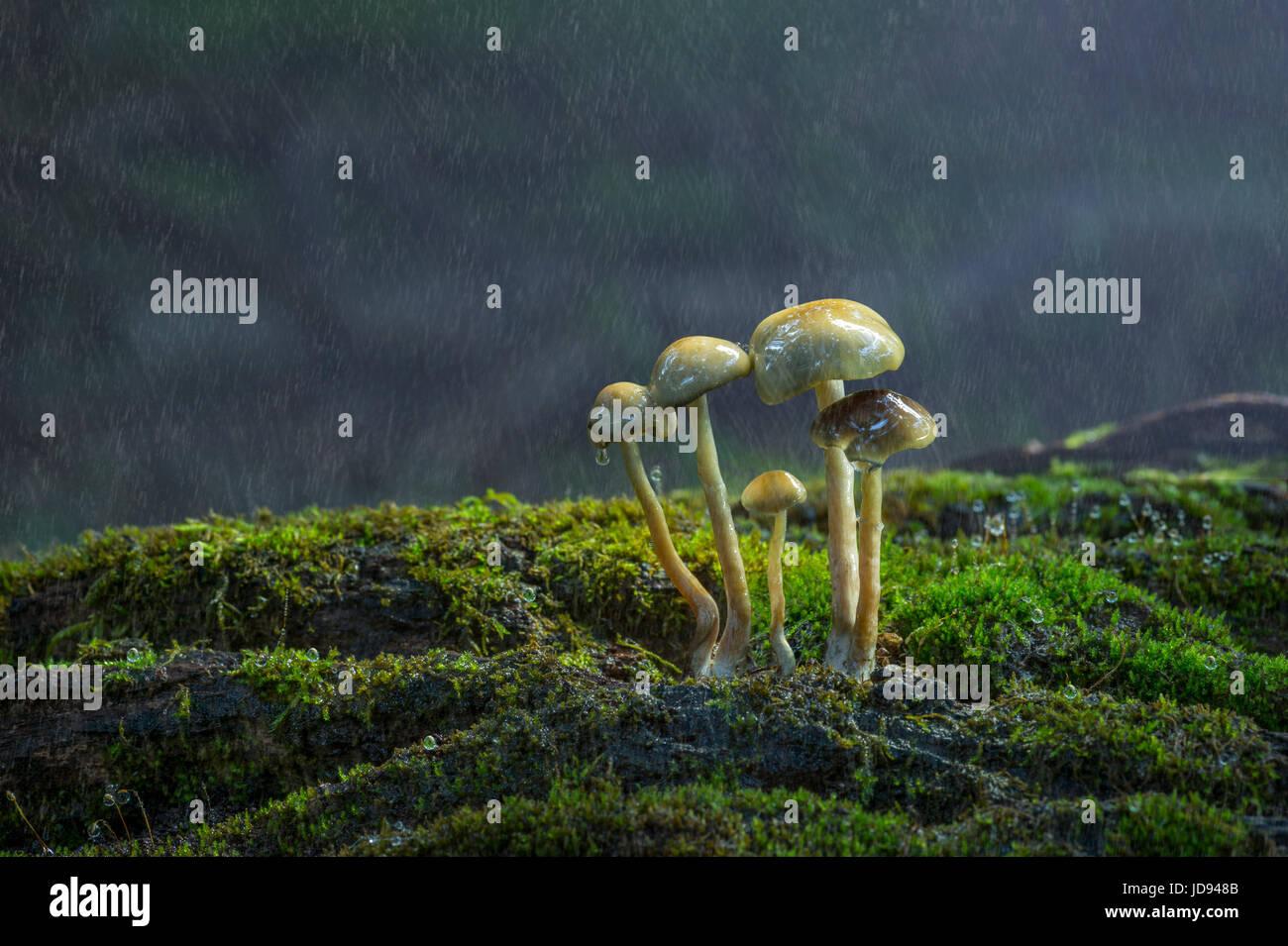 Mazzetto di funghi sotto la pioggia Immagini Stock