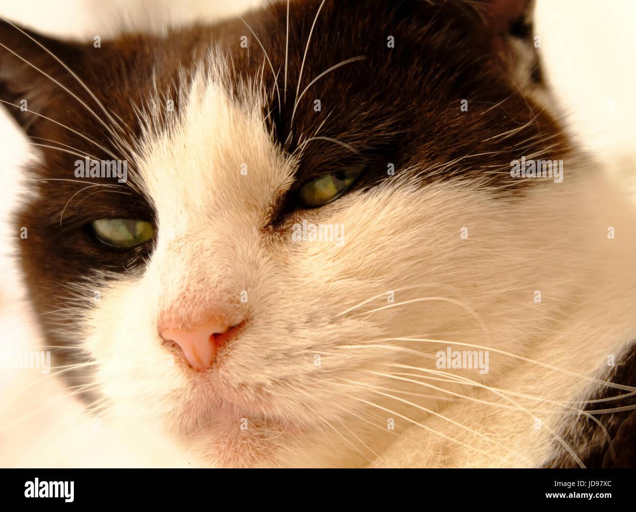Dirt, il gatto perennemente sporco che vive nel museo delle ferrovie del Nevada.