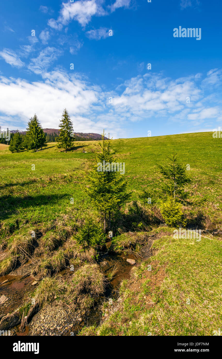 Selvatica piccola valle tra la foresta sul pendio erboso. bellissimo paesaggio nel tempo soleggiato Immagini Stock