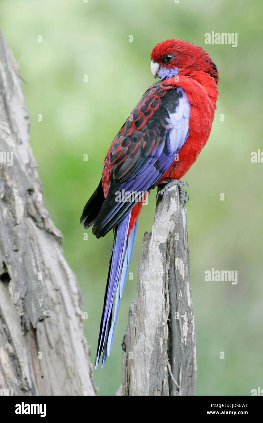 Wilson Promontorio di NP., Australia, Wilsons Promontory NP., Australien Foto Stock