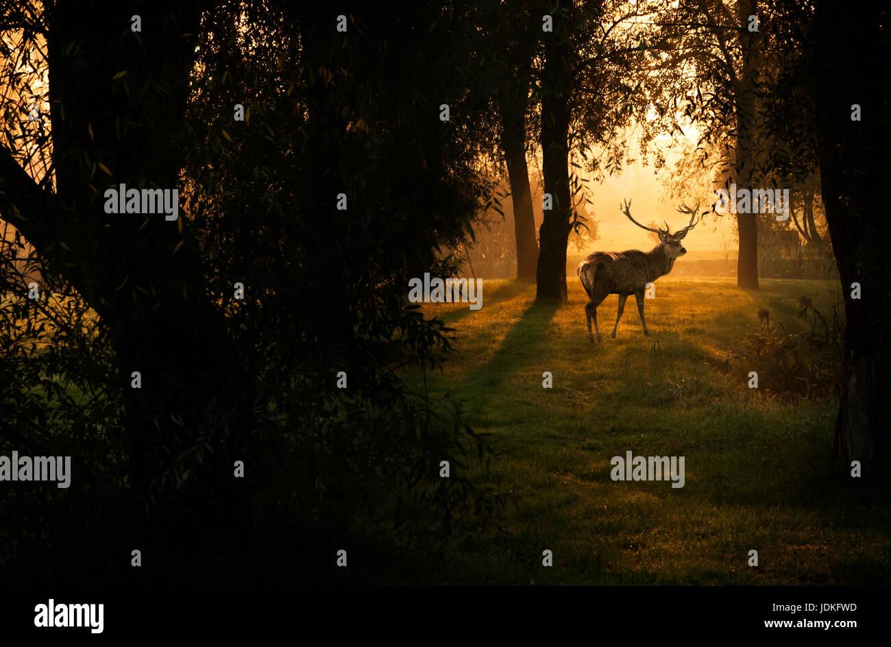 Cervi nella foresta di autunno Immagini Stock