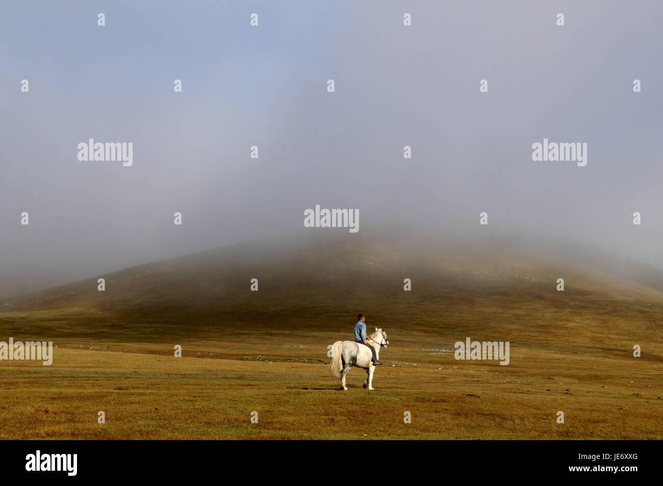 In Mongolia e in Asia centrale, provincia Arkhangai, ragazzo sul cavallo bianco, scenario, nebbia, Immagini Stock