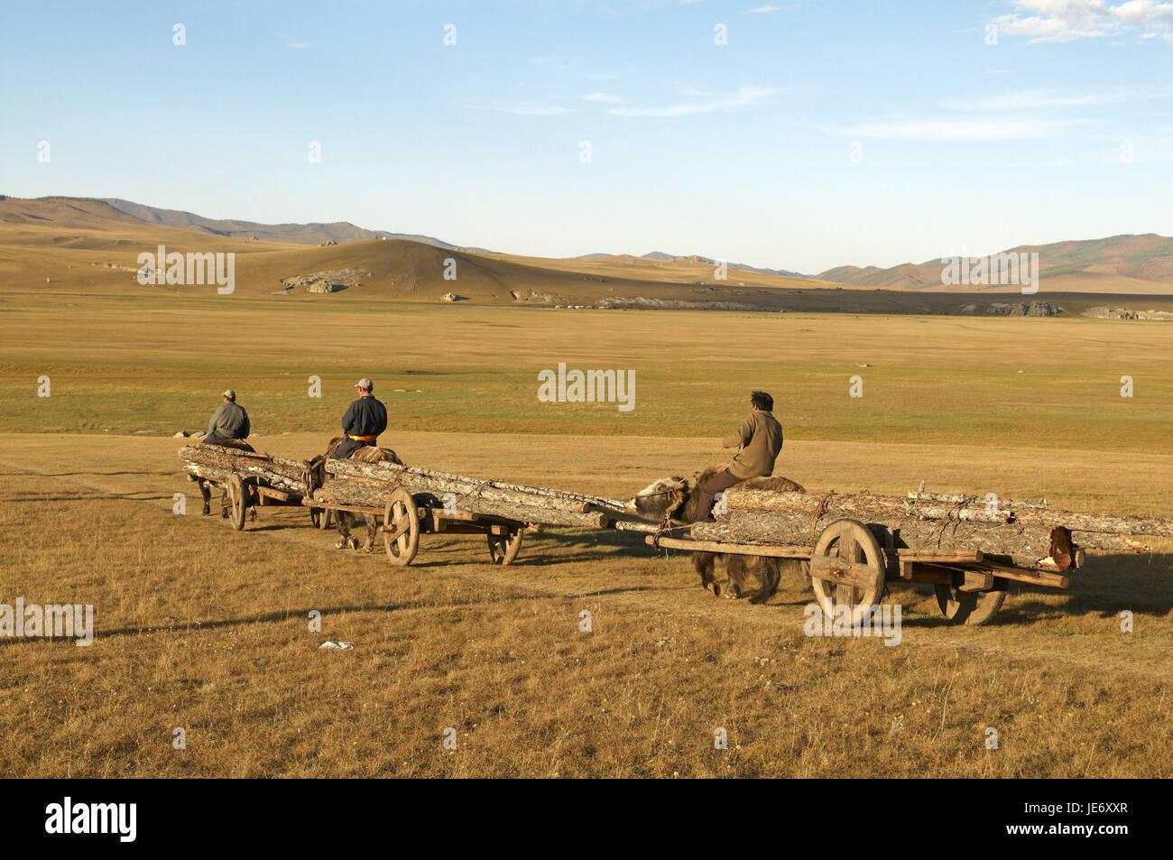 In Mongolia e in Asia centrale, provincia Arkhangai, nomade, yak, carrelli, portano in legno, Immagini Stock