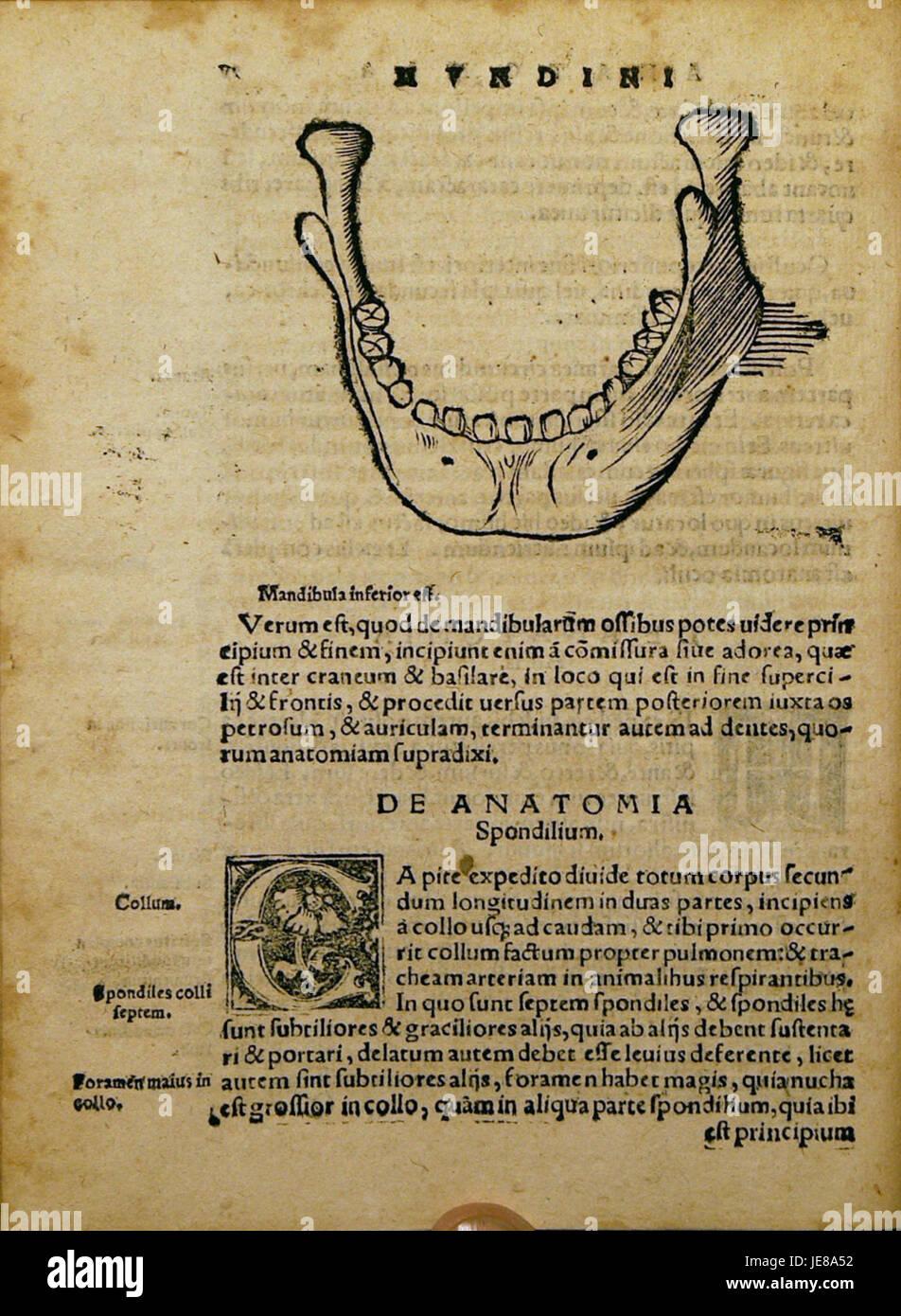 Dryander Anatomia Mundini 118 Immagini Stock