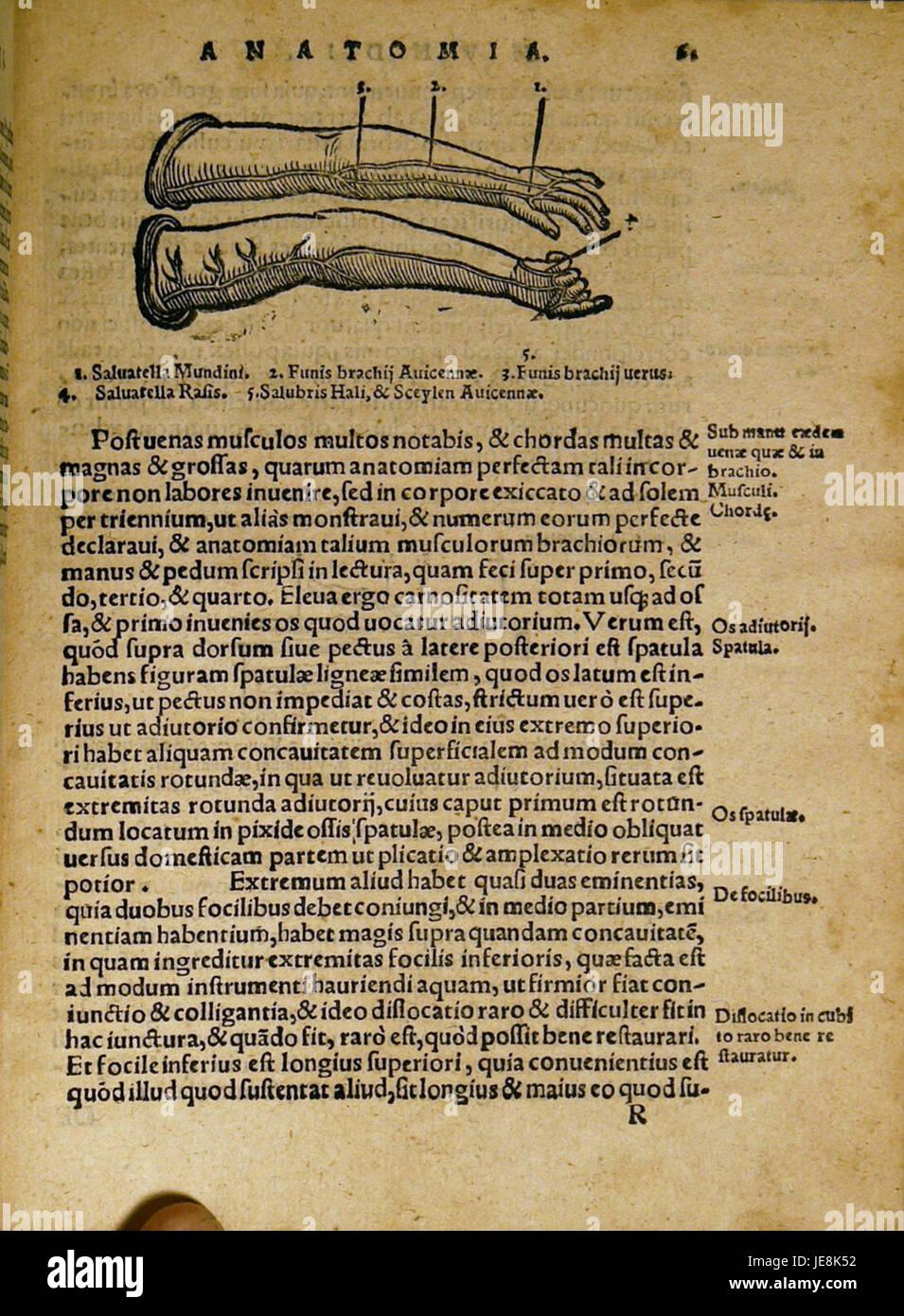 Dryander Anatomia Mundini 121 Immagini Stock