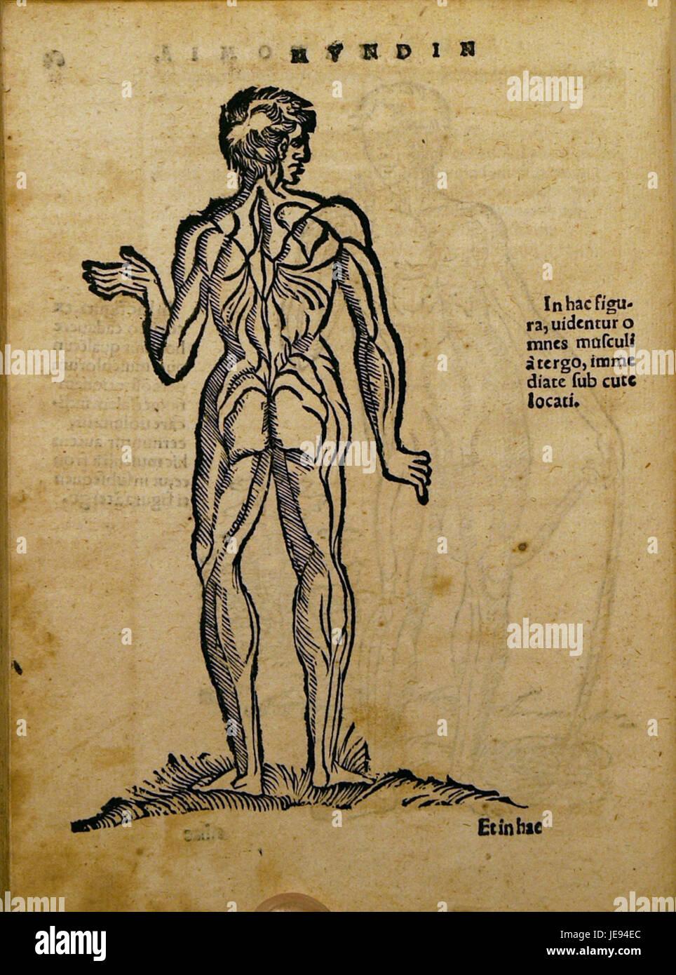 Dryander Anatomia Mundini 128 Immagini Stock