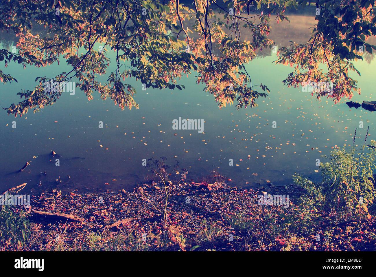 Foto d'epoca di foglie di autunno e sullo sfondo il lago Immagini Stock