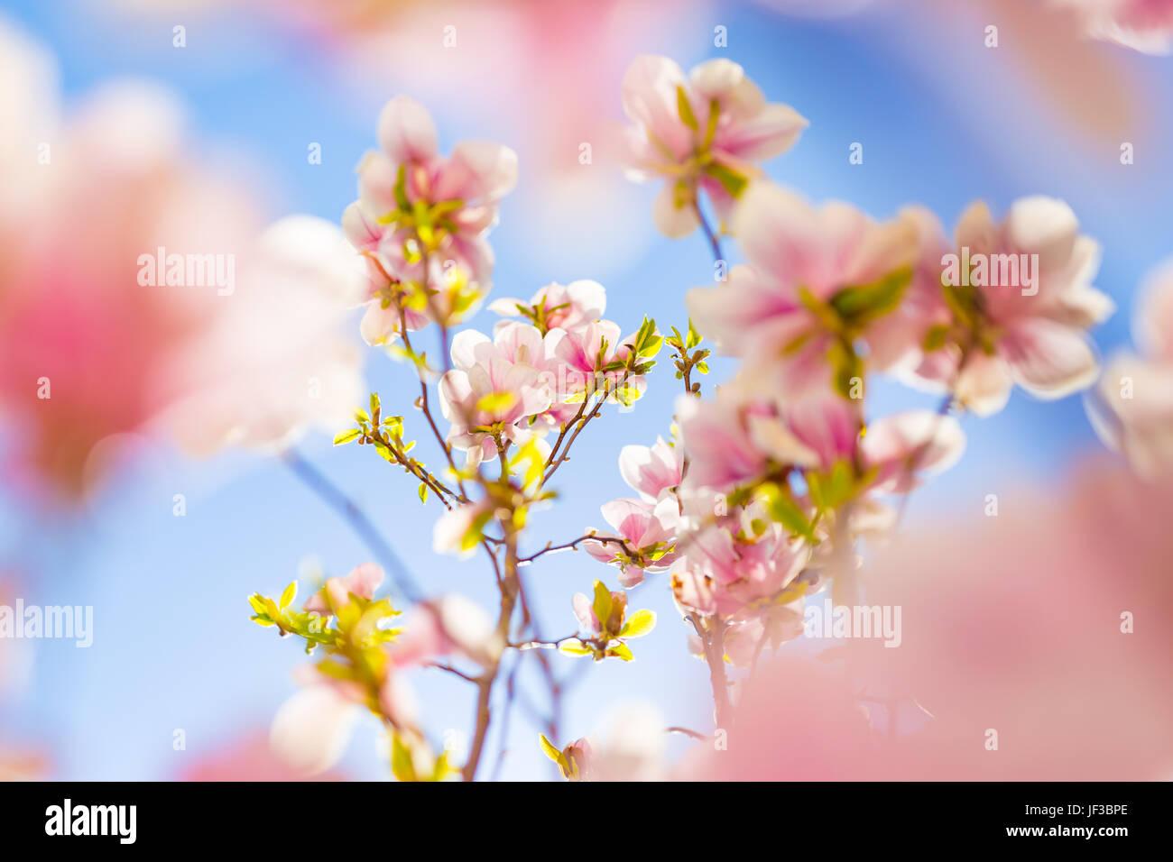 Incredibile Fiori Di Primavera Sullo Sfondo Luminosa E Morbida