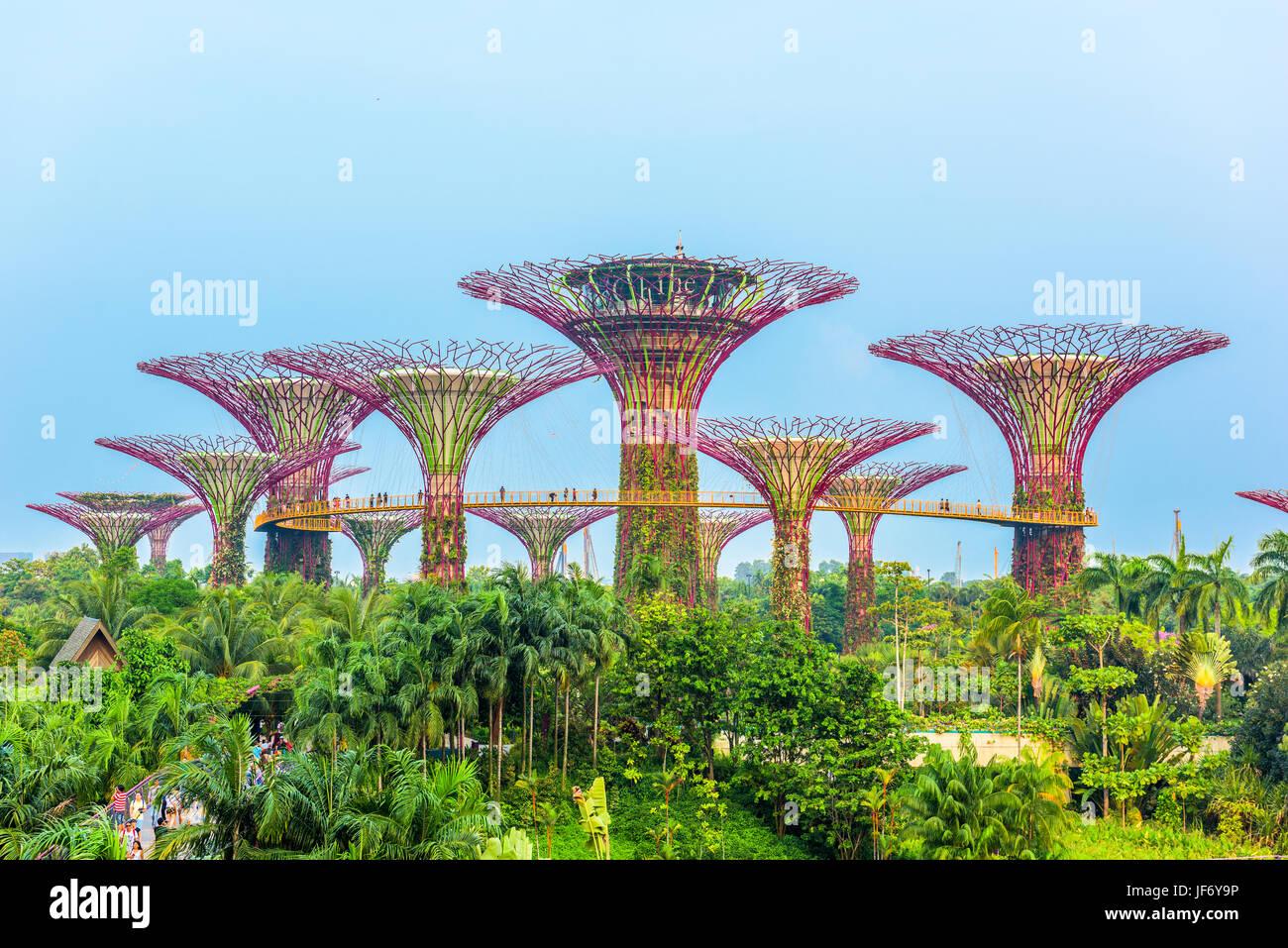 Singapore - 5 settembre 2015: supertrees presso i giardini della baia. Immagini Stock
