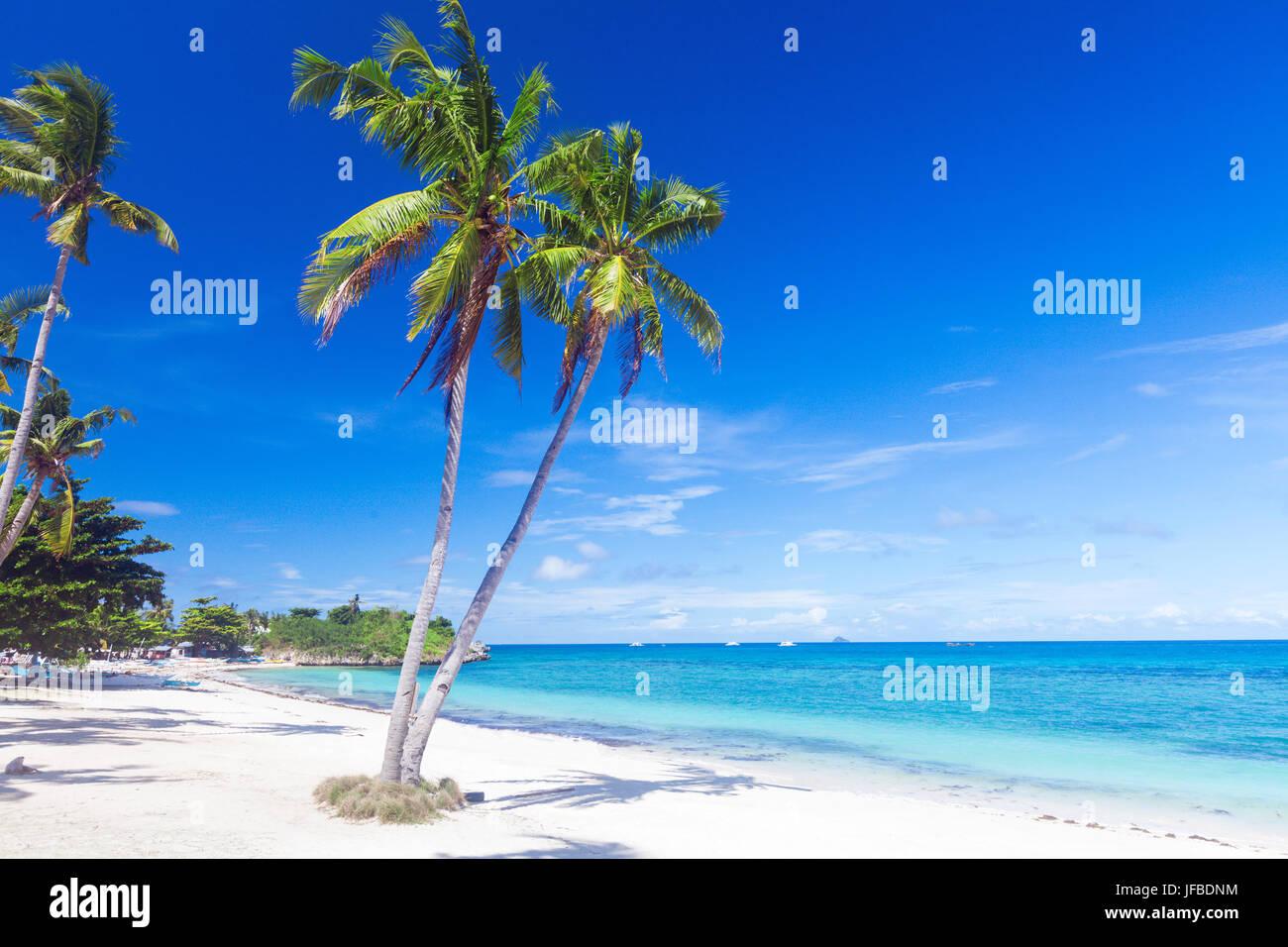 Spiaggia tropicale con palme di cocco Immagini Stock