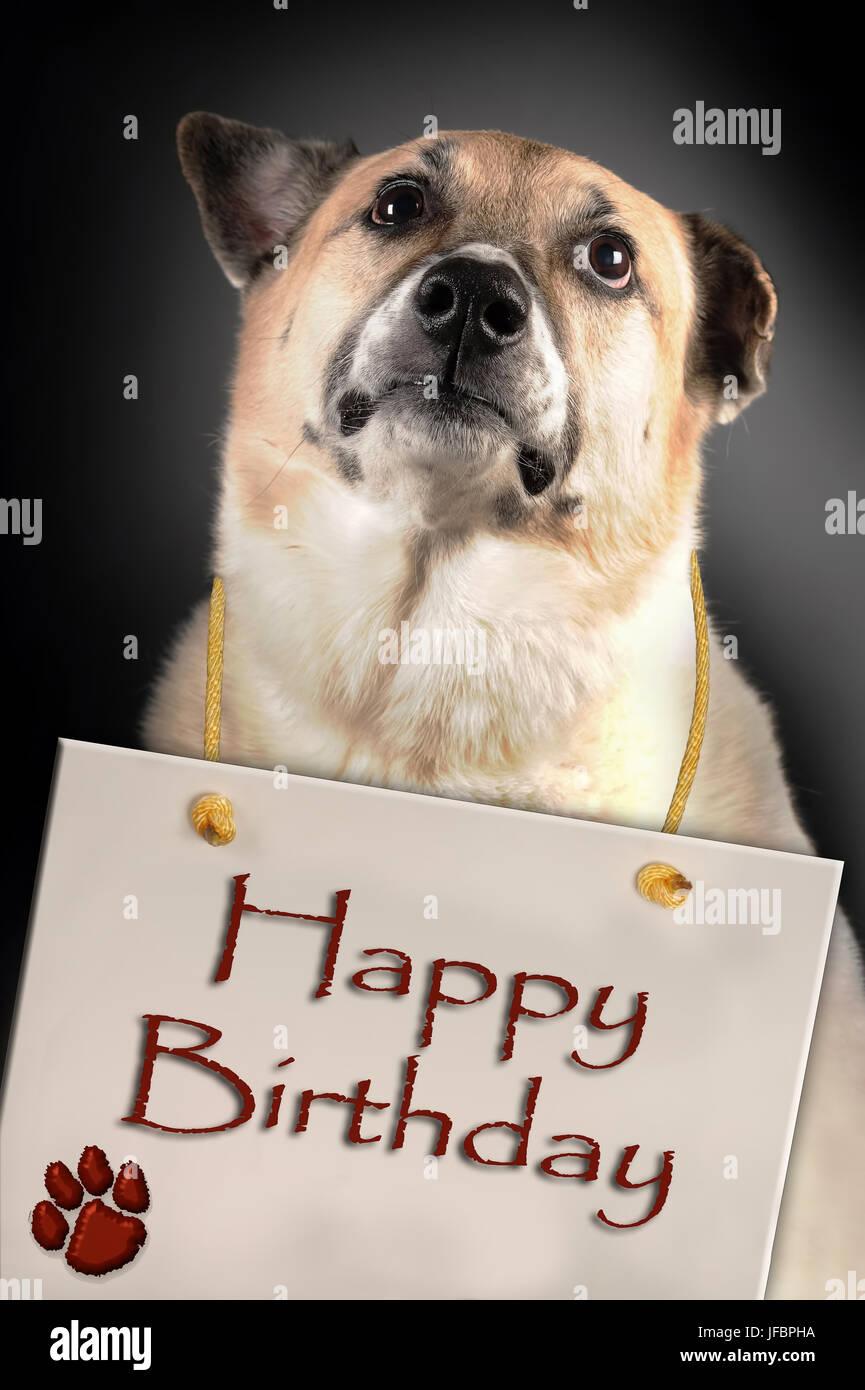 Cane Con Buon Compleanno Segno Foto Immagine Stock 147161990 Alamy