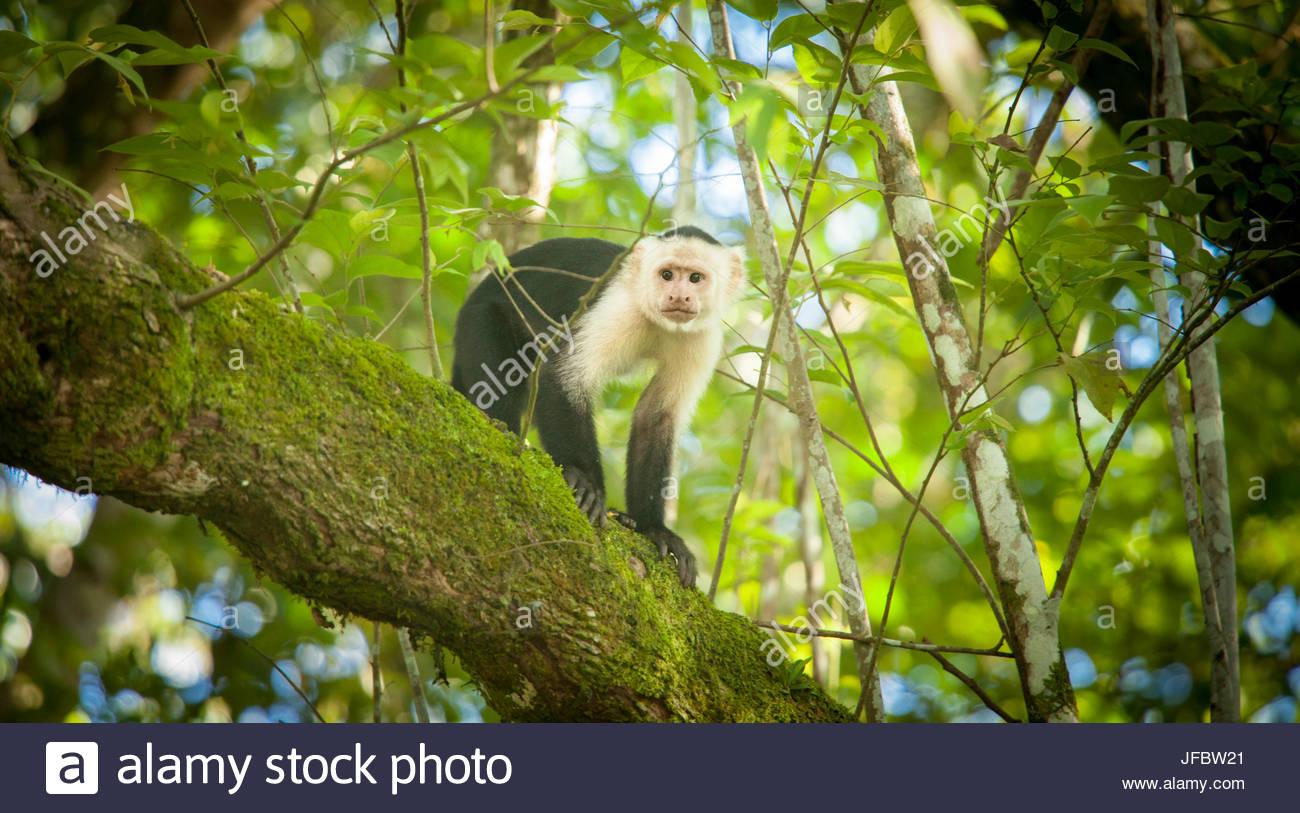 Ritratto di una scimmia in una struttura ad albero. Immagini Stock