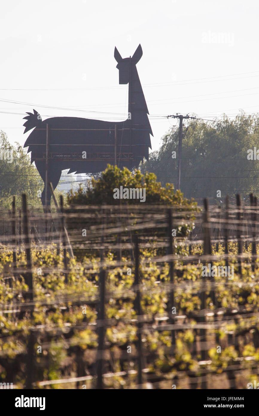 Il Cile, Valle de Curico, equo commercio, vino, Miguel Torres, vino campo, Vicuña, marca Immagini Stock