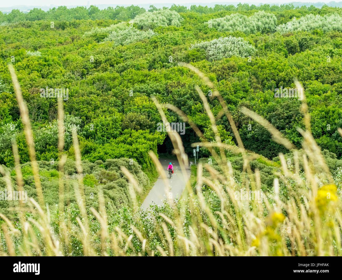 Equitazione donna bike attraverso la foresta Immagini Stock