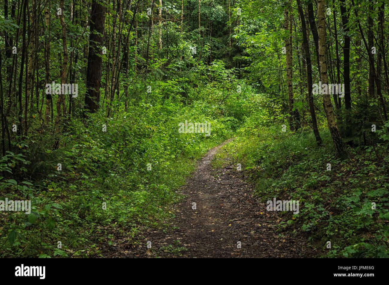 Scienze naturali, percorso nel folto della foresta Immagini Stock