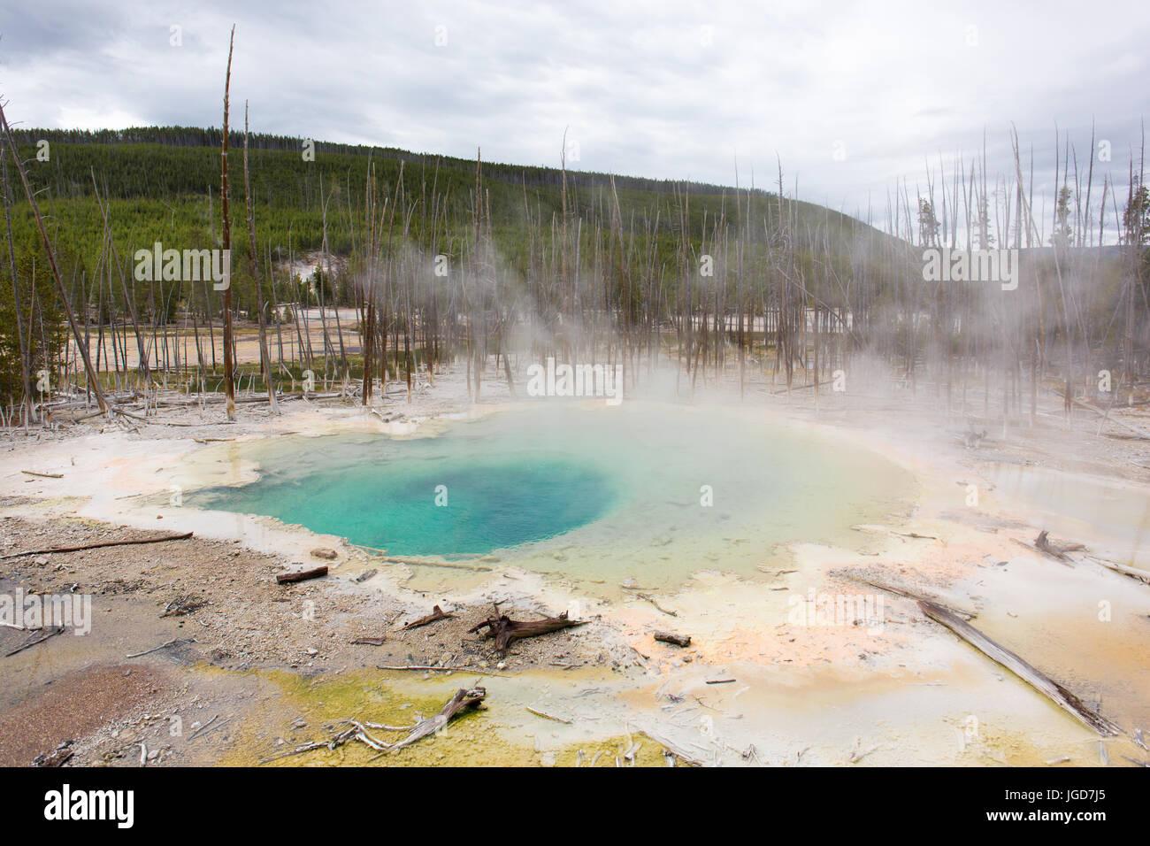 Molla di cisterna, indietro il bacino, Norris Geyser Basin, il Parco Nazionale di Yellowstone Immagini Stock