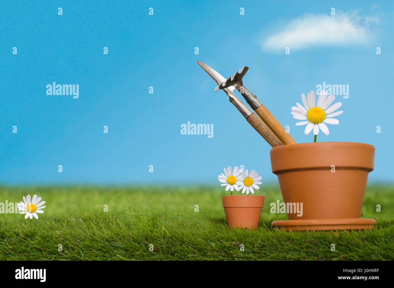 Grandi e piccoli vasi per piante contenenti inglese daisy fiori e
