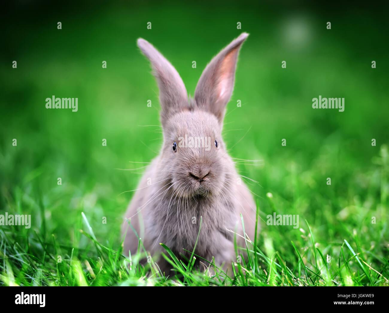 Piccolo coniglio su erba verde nel giorno di estate Immagini Stock