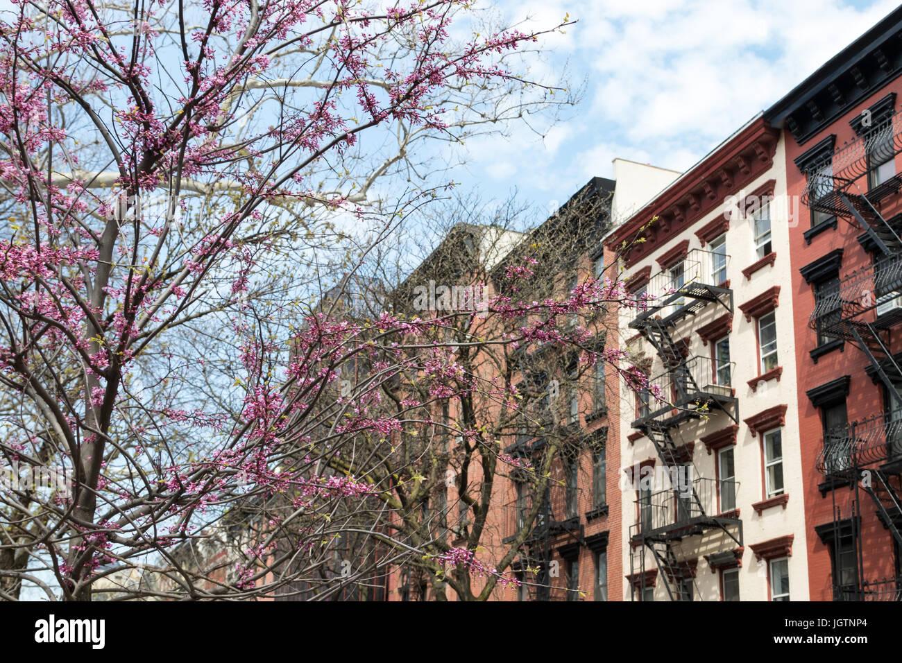 New York City spring street scene colorate con albero in fiore e sullo sfondo di vecchi edifici di appartamenti Immagini Stock