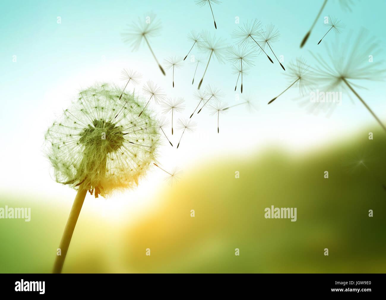 Tarassaco semi al vento attraverso un campo estivo di sfondo, immagine concettuale significato cambiare, crescita, Immagini Stock