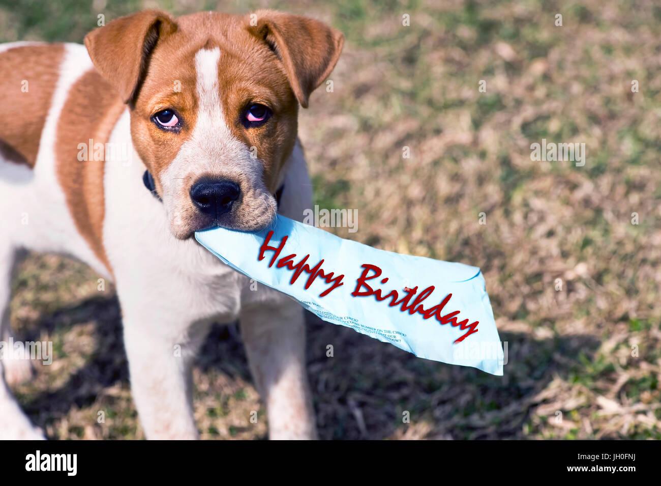 Buon Compleanno Da Piccolo Cucciolo Con Una Stanza Per Il Tipo Foto