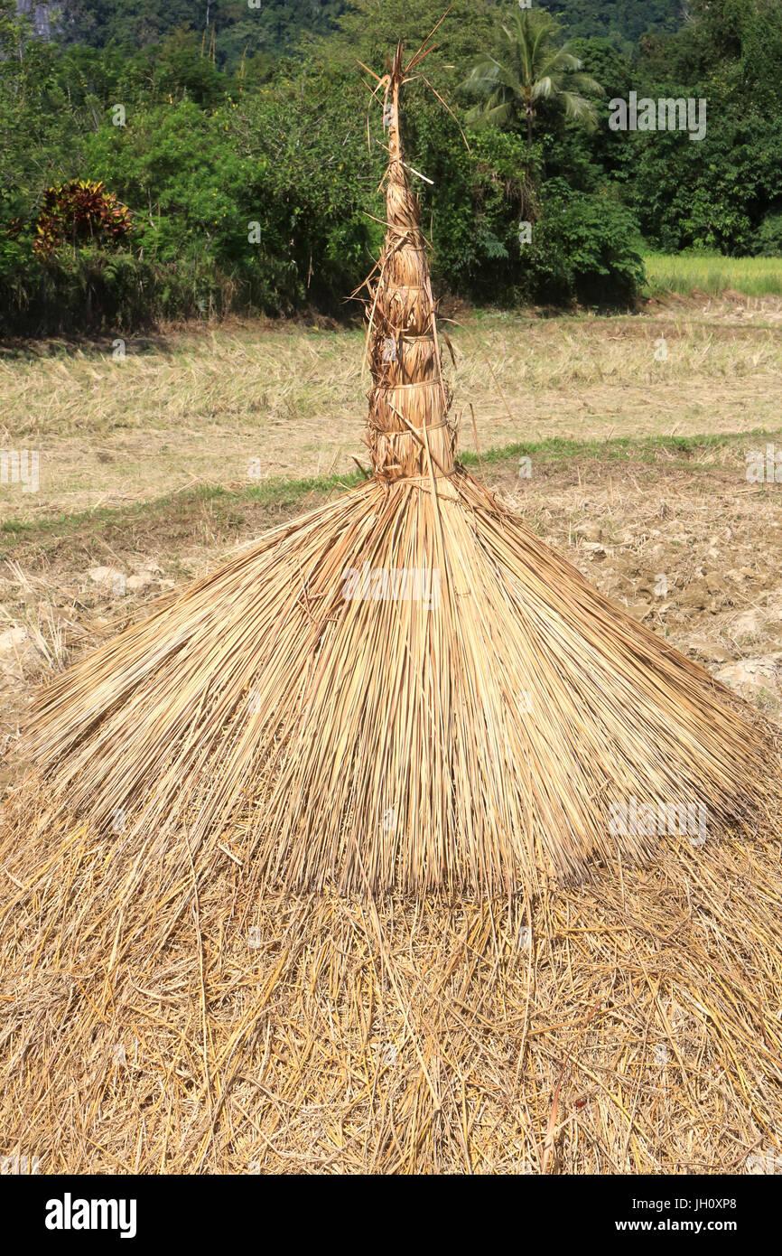 L'agricoltura. Campo di riso dopo il raccolto. Laos. Immagini Stock