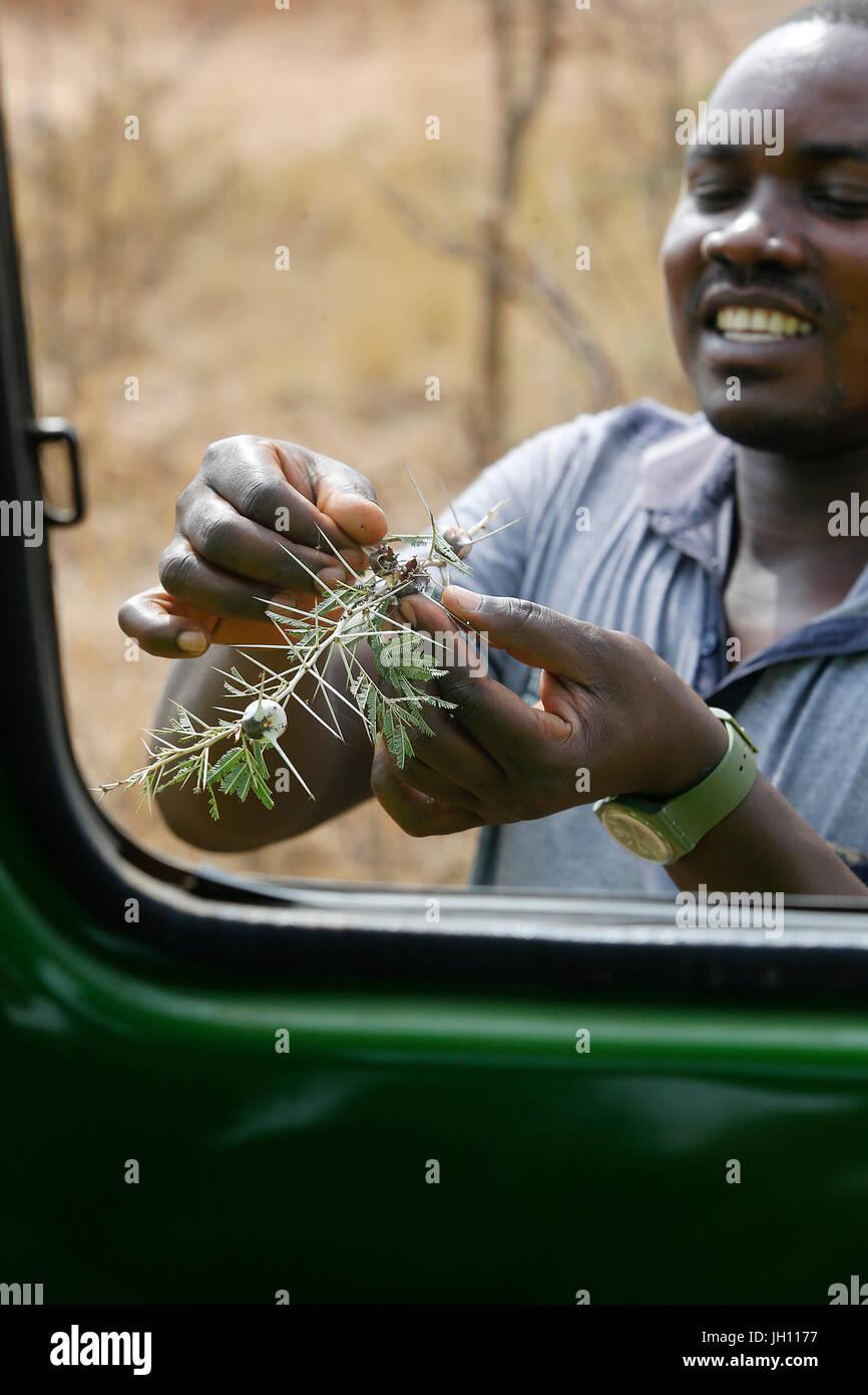 Guida in Murchison parco nazionale. Uganda. Immagini Stock