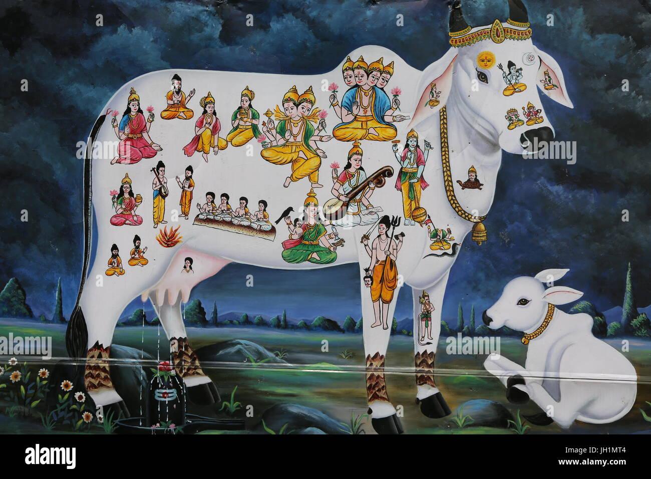 Risultati immagini per vacca induismo