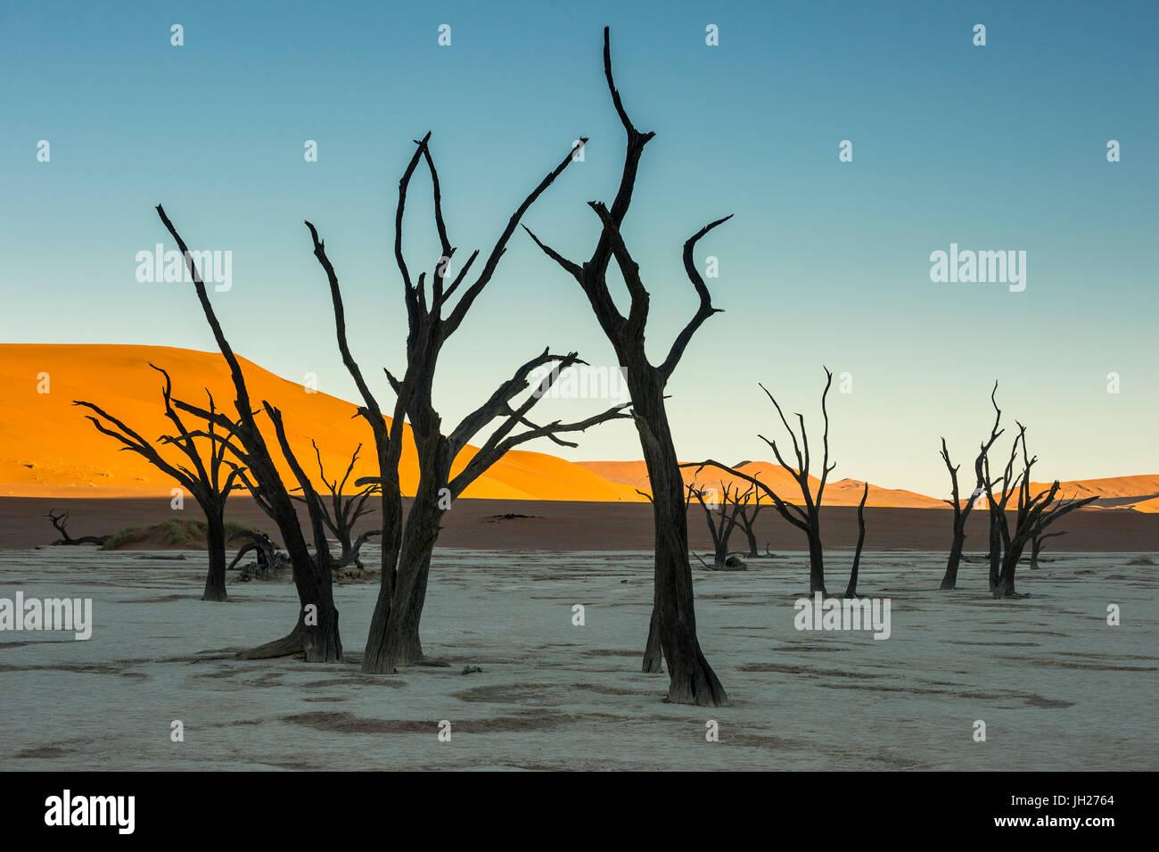 Deadvlei, un antico lago secco nel deserto del Namib, Namibia, Africa Immagini Stock