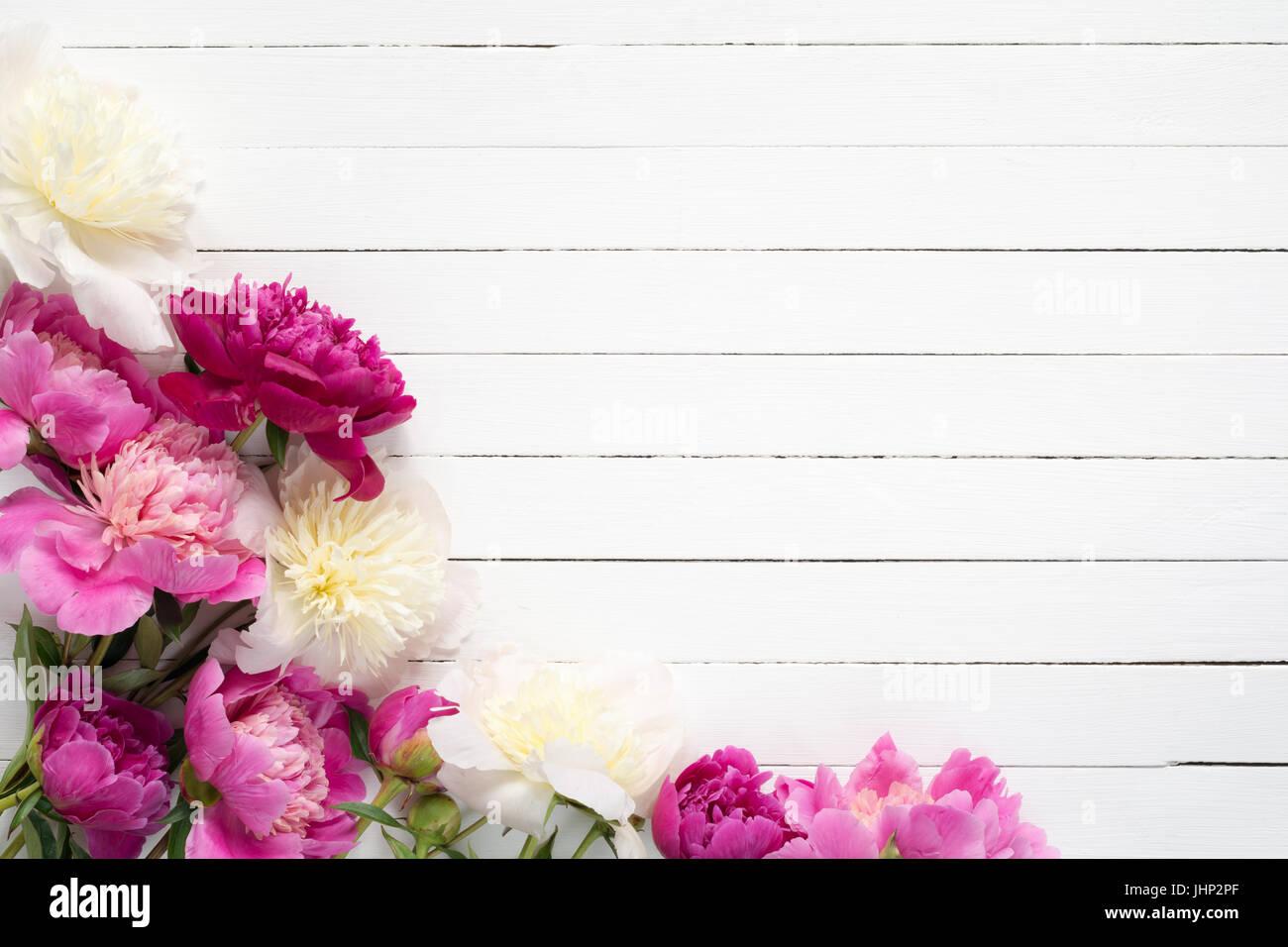 Cornice Floreale Sfondo Con Bella Rosa Viola E Bianco Le Peonie