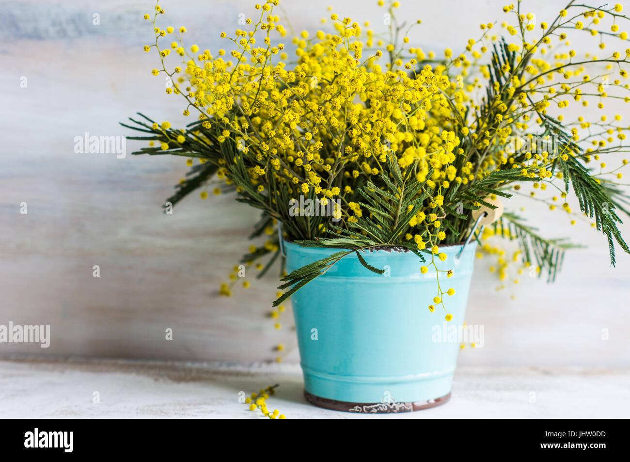Pasqua festosa cornice con luminoso giallo mimosa (acacia) Fiori e uova di  pasqua a 3a35b305b3b4