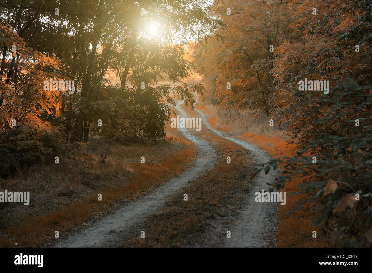 In autunno la strada forestale Immagini Stock